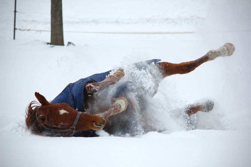 horse on snow during daytime