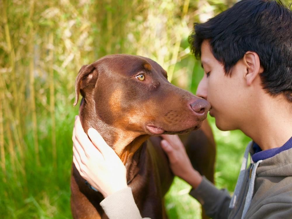 man touching short-coated brown dog