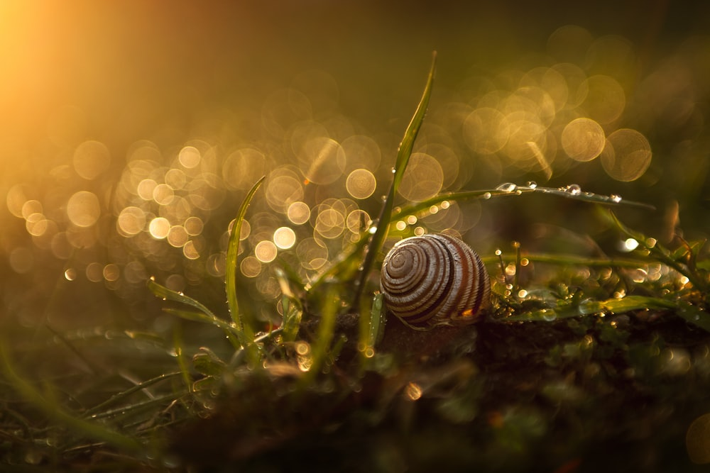 white and black striped snail