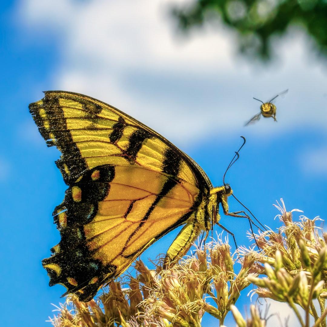 Butterfly spots approaching bee