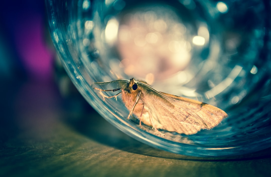 Photo of a moth who got lost in my office. When I tried to catch the moth with a glass and transport it outside, I took a quick snapshot.