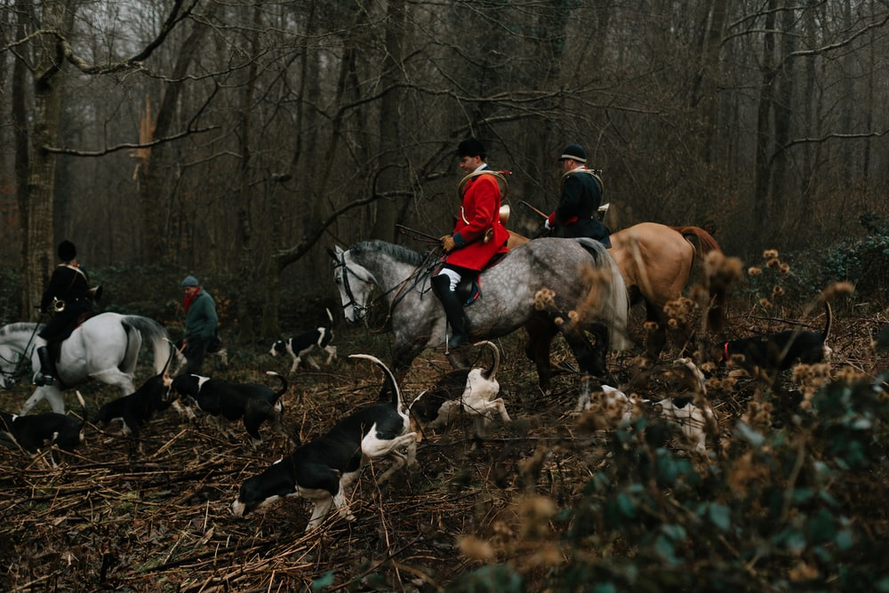 man wearing red pea coat riding on gray horse walking on forest