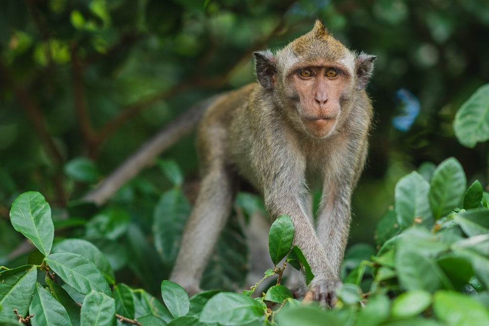 gray monkey on gree plant