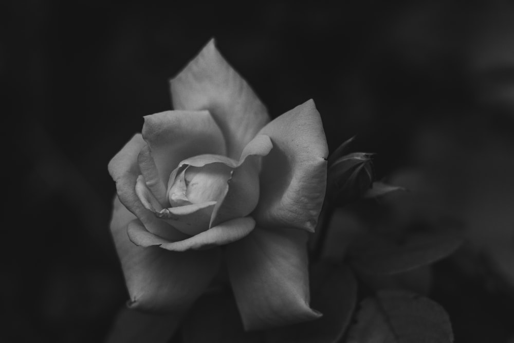 greyscale photo of flower