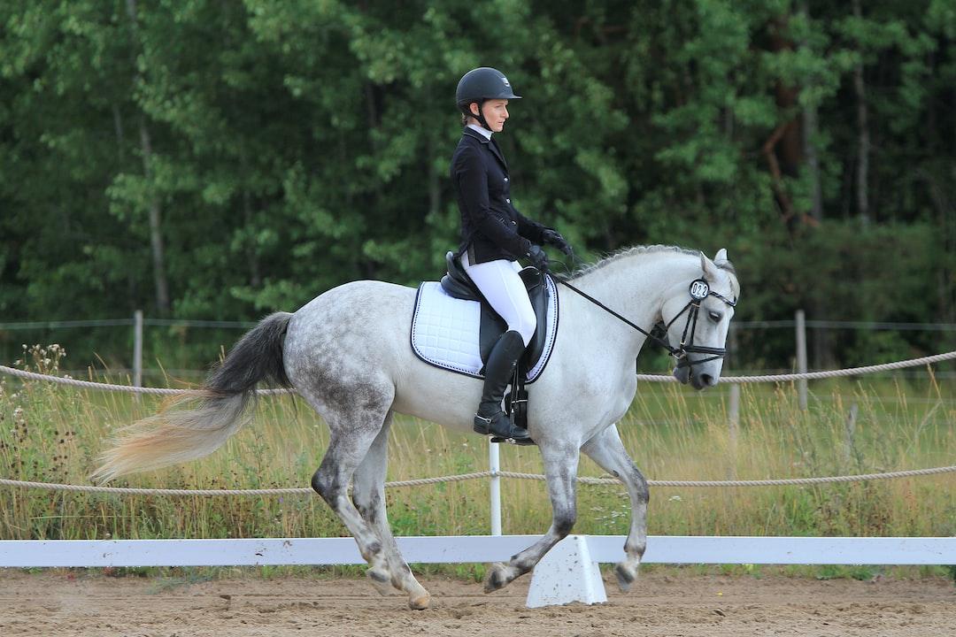 Grey connemara pony mare