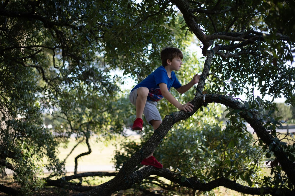 boy in blue t-shirt and gray shorts climbing tree