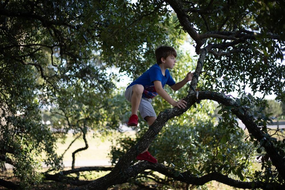 boy in blue t-shirt and gray shorts climbing tree