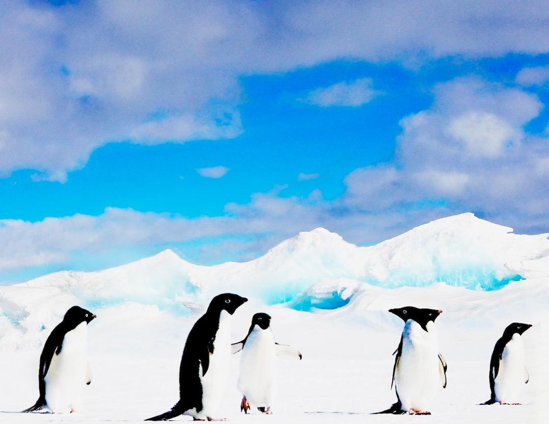 The meeting of the flightless birds... Taken on McMurdo Sound. Canon EOS 5D Mark II 70-200mm Lens.