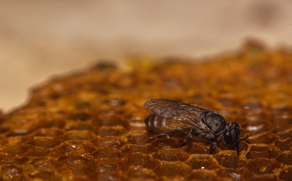 close-up photography of brown bee