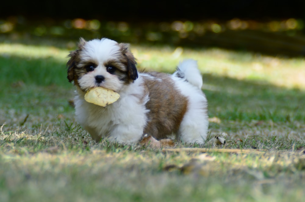dog holding mushroom