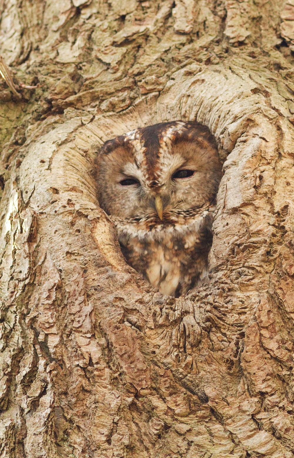 brown owl in branch