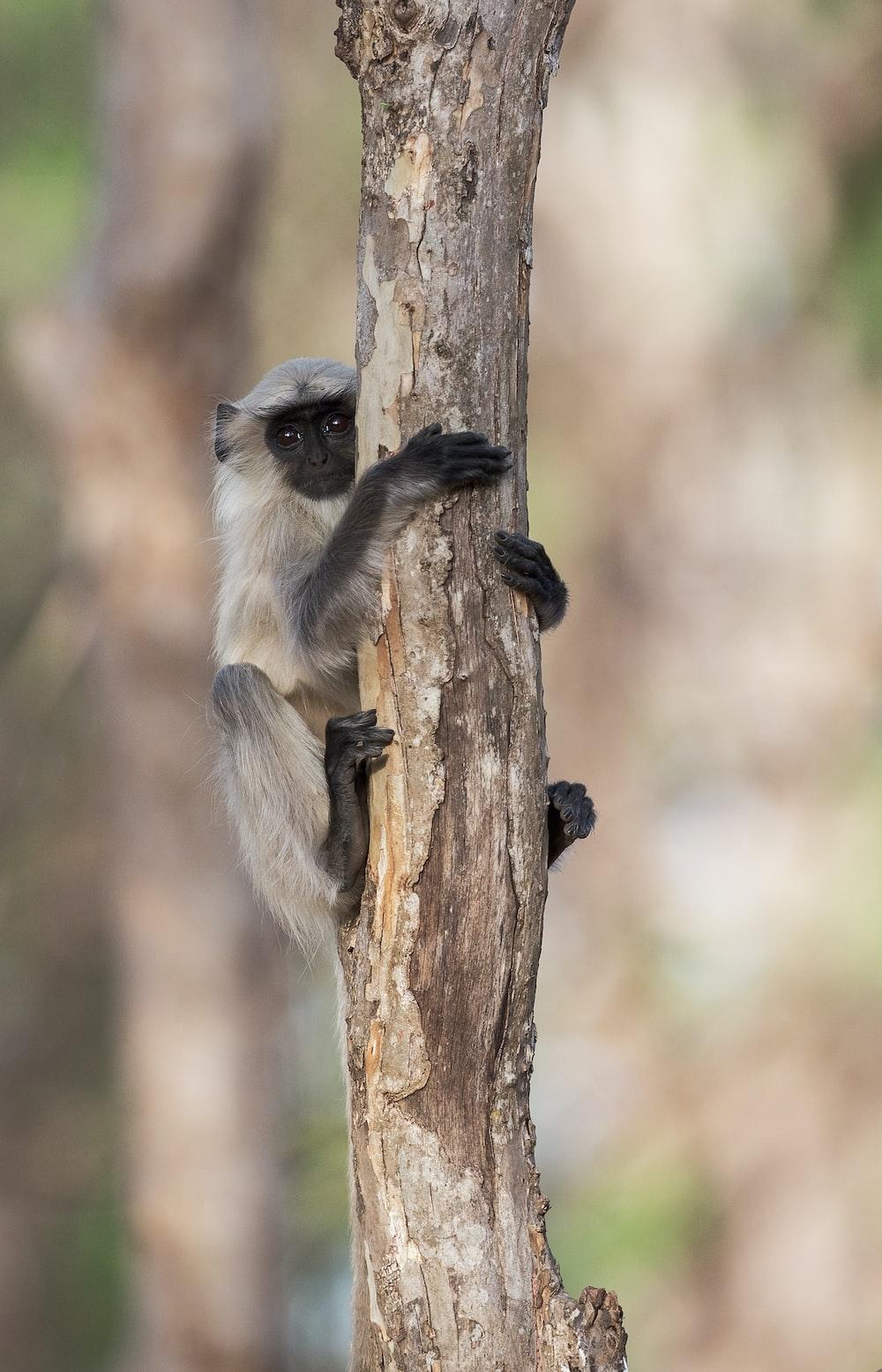 gray monkey climbing on branch