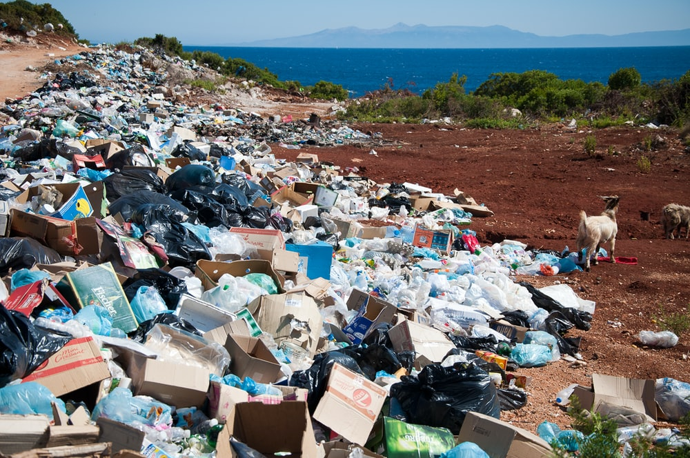 garbage near forest