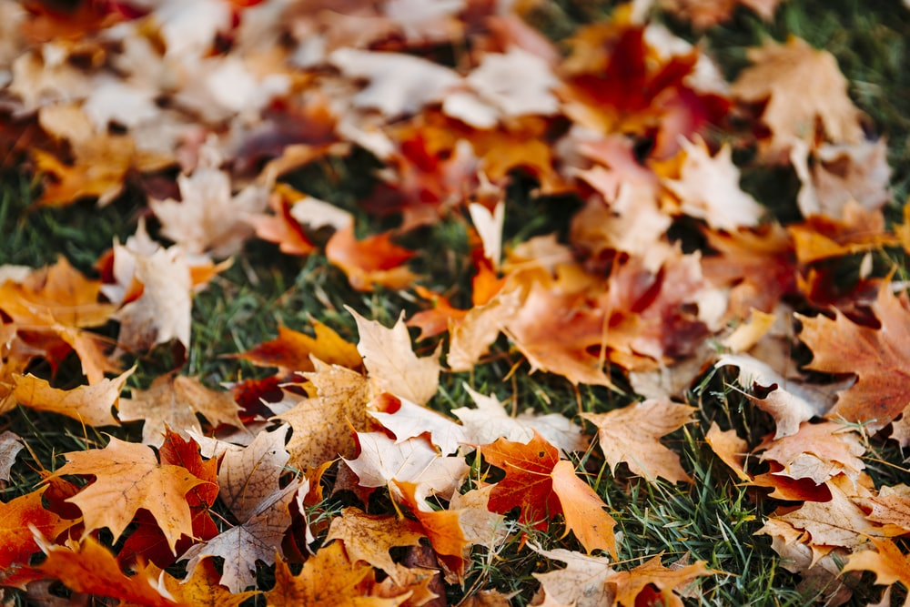 selective focus photography of fallen brown leaves on green grass