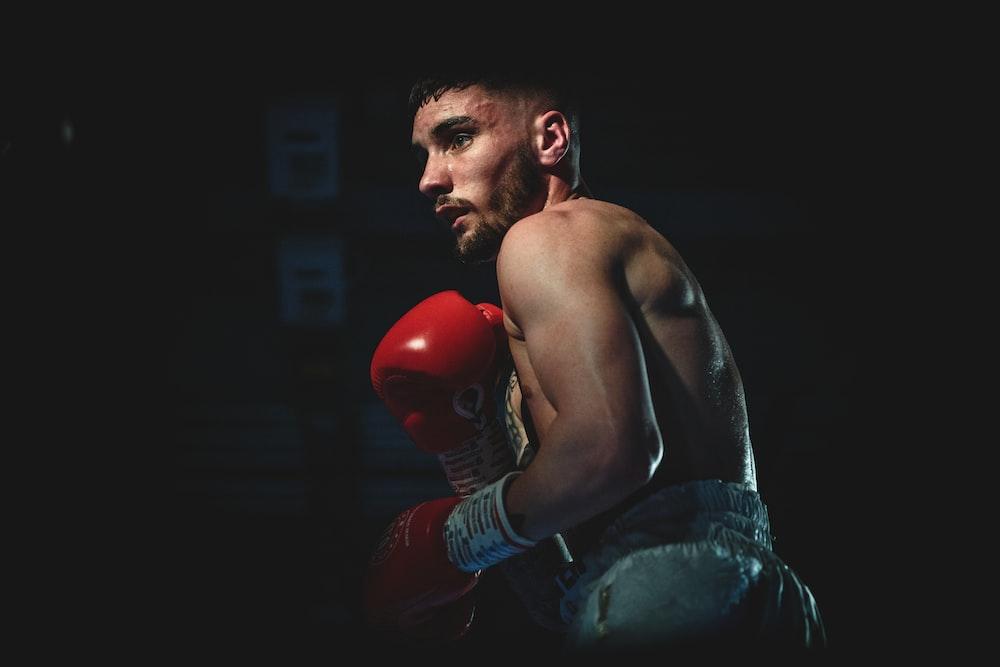 boxer photography
