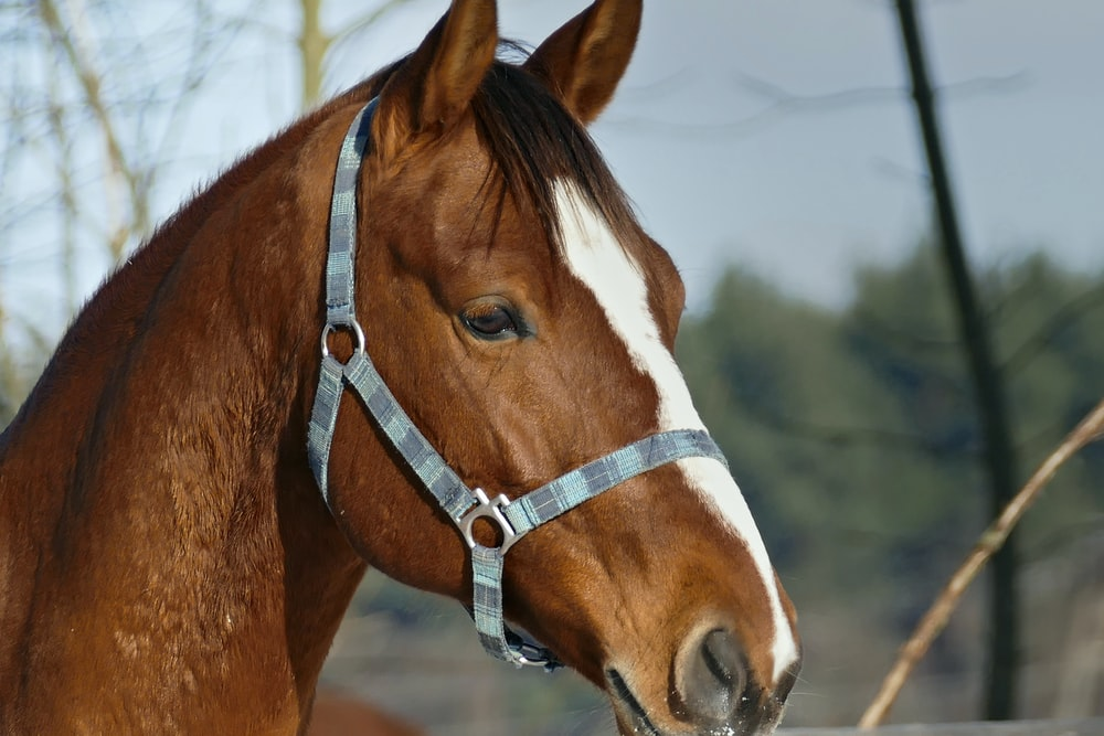 brown and white horse facing sideways