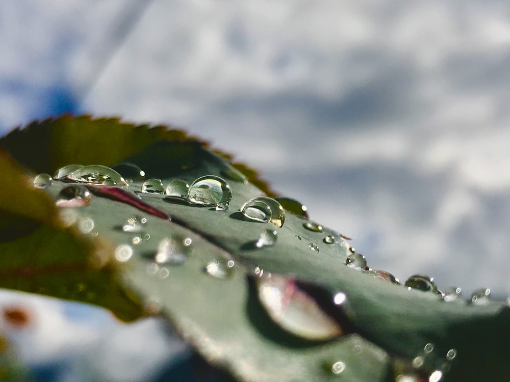 macro photography of water drops on green leaf