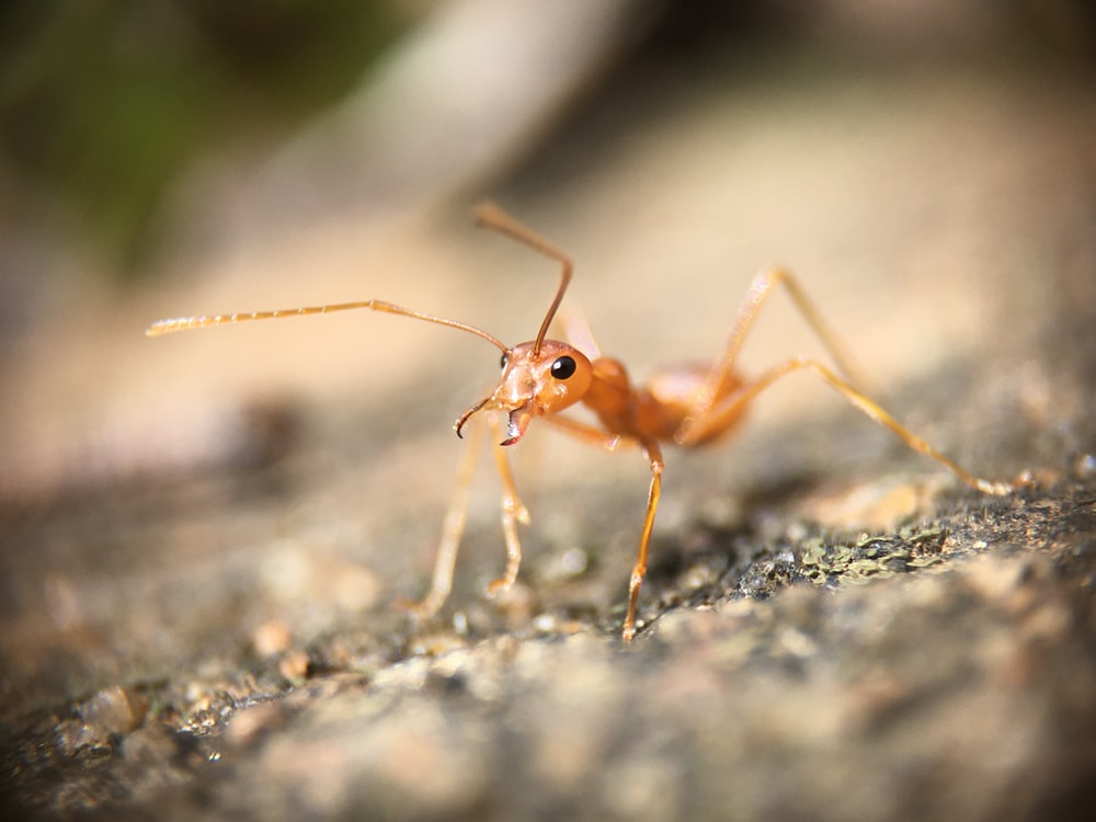 selective focus photography of red ant on gray pavement
