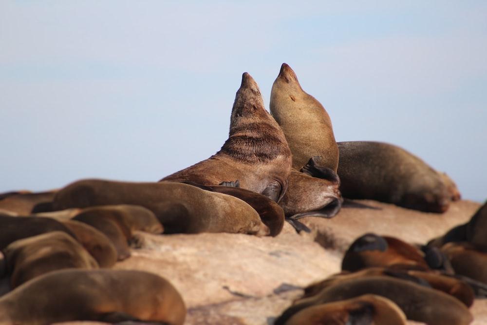 macro photography of brown sea lion