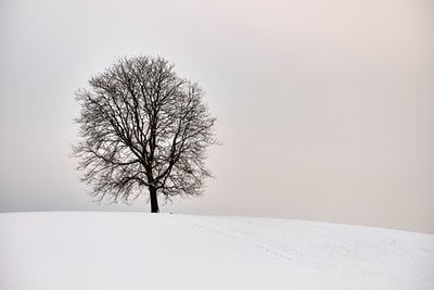 lonely tree on hill in deep winter condition