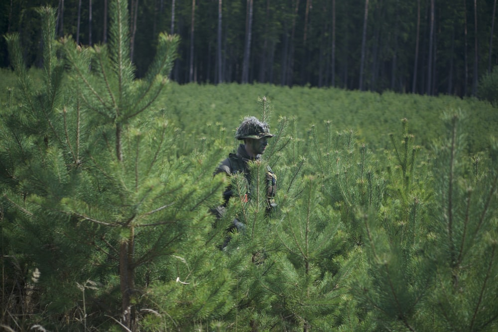 soldier man standing near pine trees