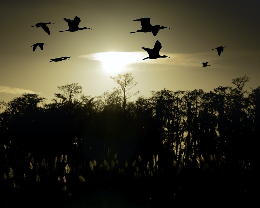 silhouette of birds on mid air