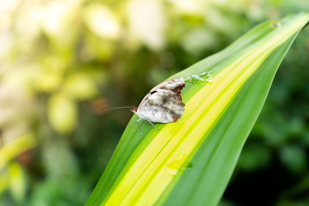 white and black butterfly on green leaf
