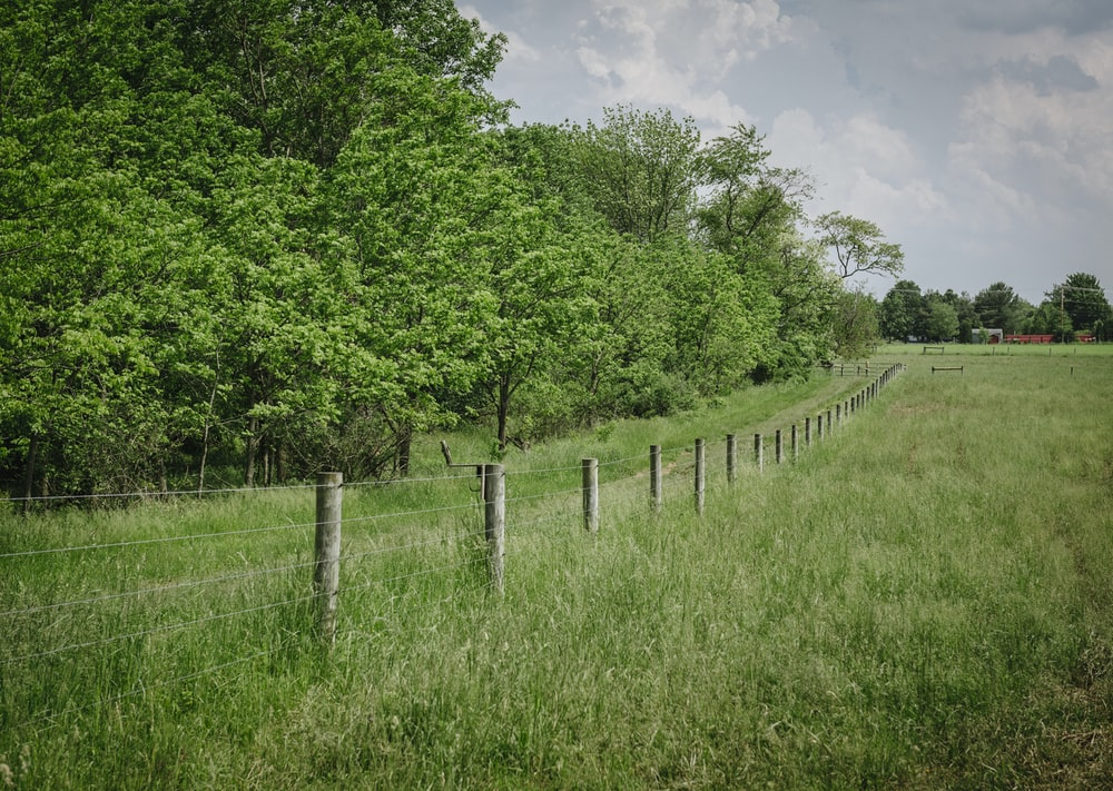 green grass field with gray wooden fence