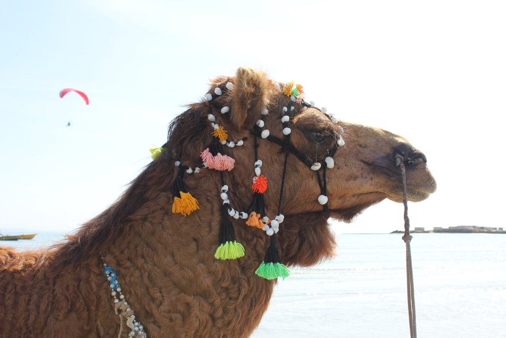 brown camel on white sand during daytime