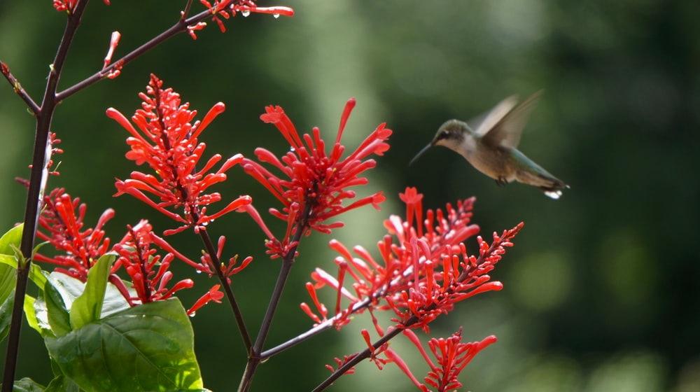 brown and white humming bird flying