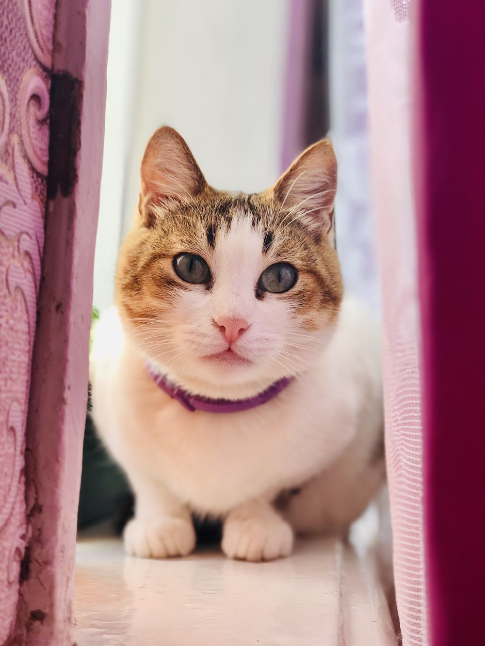 white and brown cat on pink textile