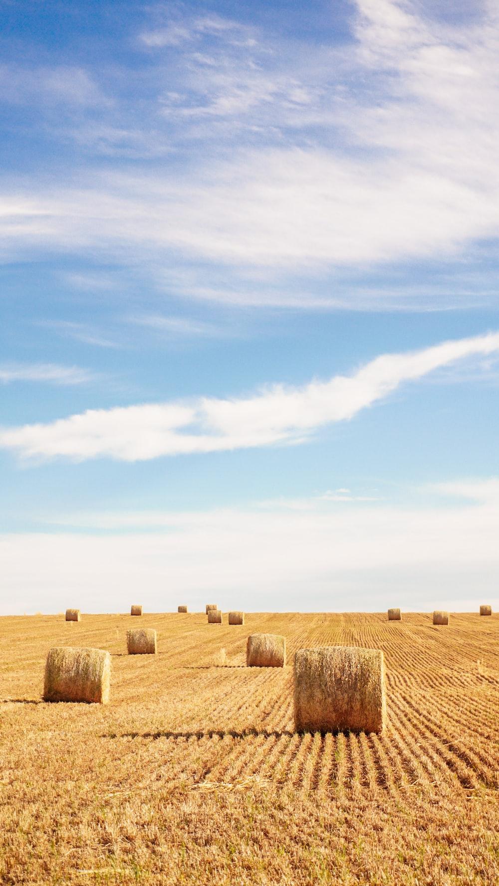 brown hays under blue sky during daytime