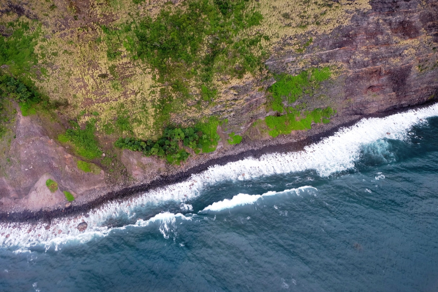 A drone view of a coastal landscape of trees and water