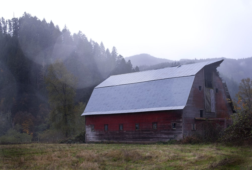 red and gray shed near the forest