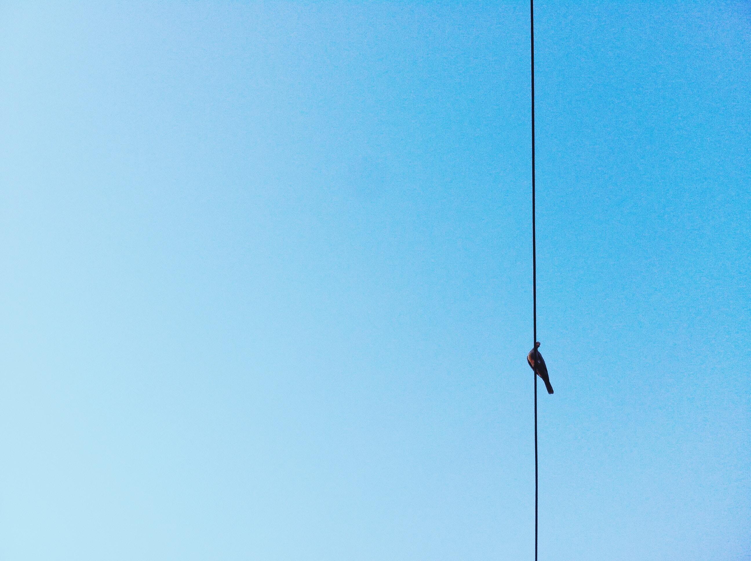 black bird on wire under clear sky