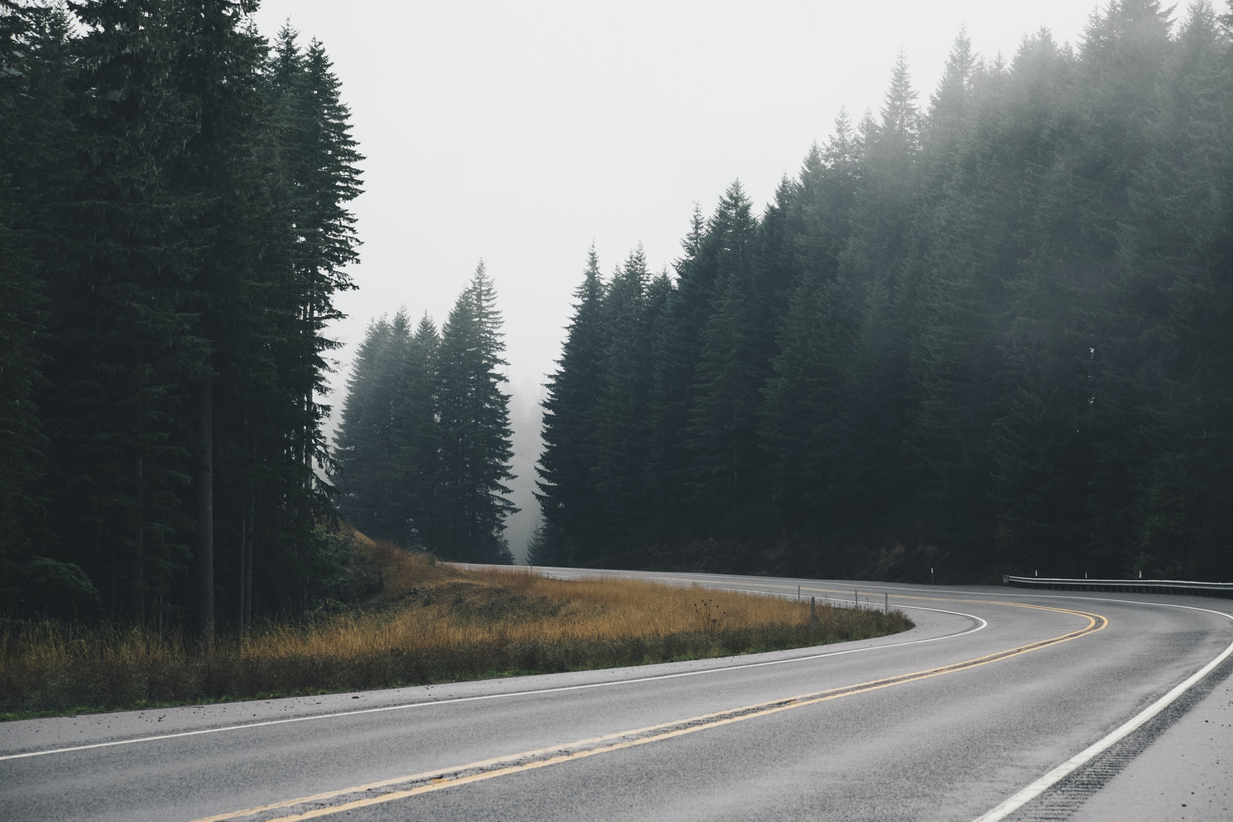 A bend in an asphalt road lined with tall coniferous trees