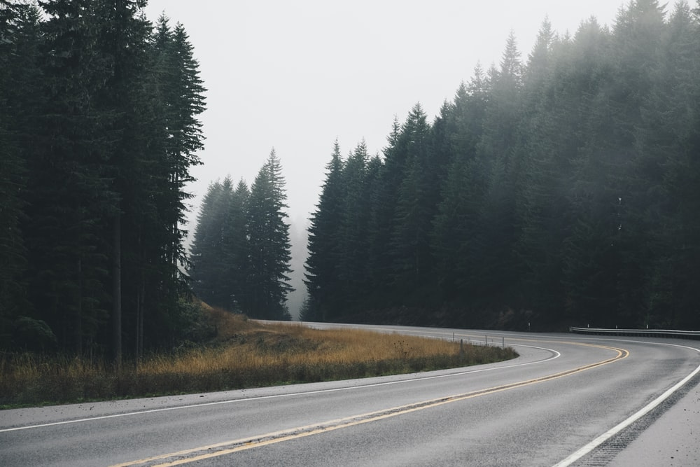 panoramic photography of winding road with inline trees