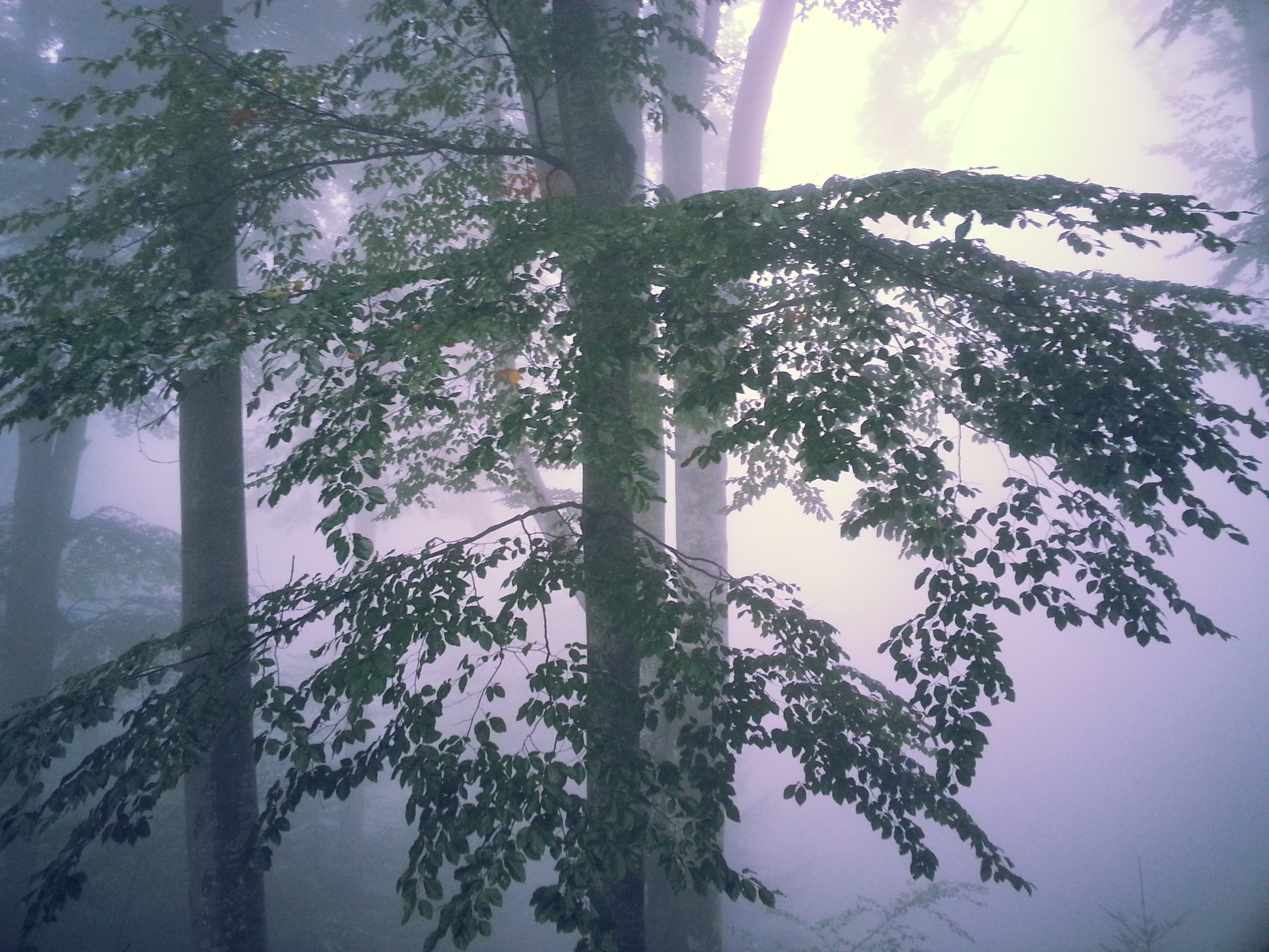Trees in a forest in a purple-hued mist