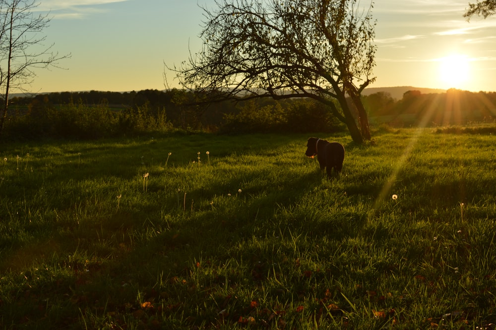 black dog on green grass near withered tree