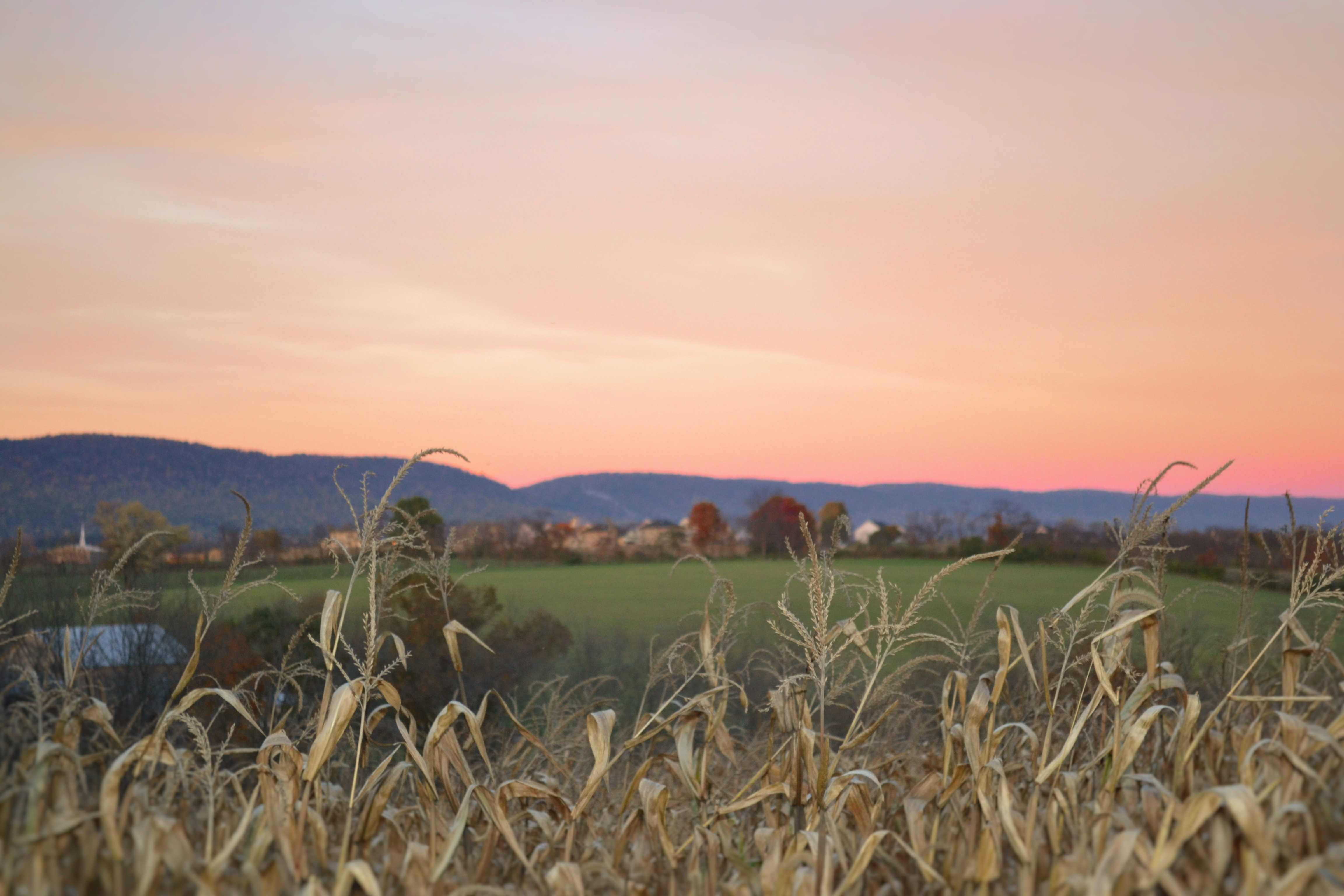 Dry crops in the foreground with a blurry rural landscape in the background