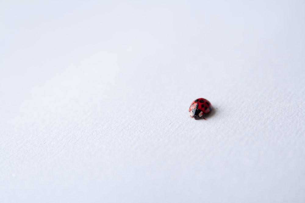red ladybug on white surface
