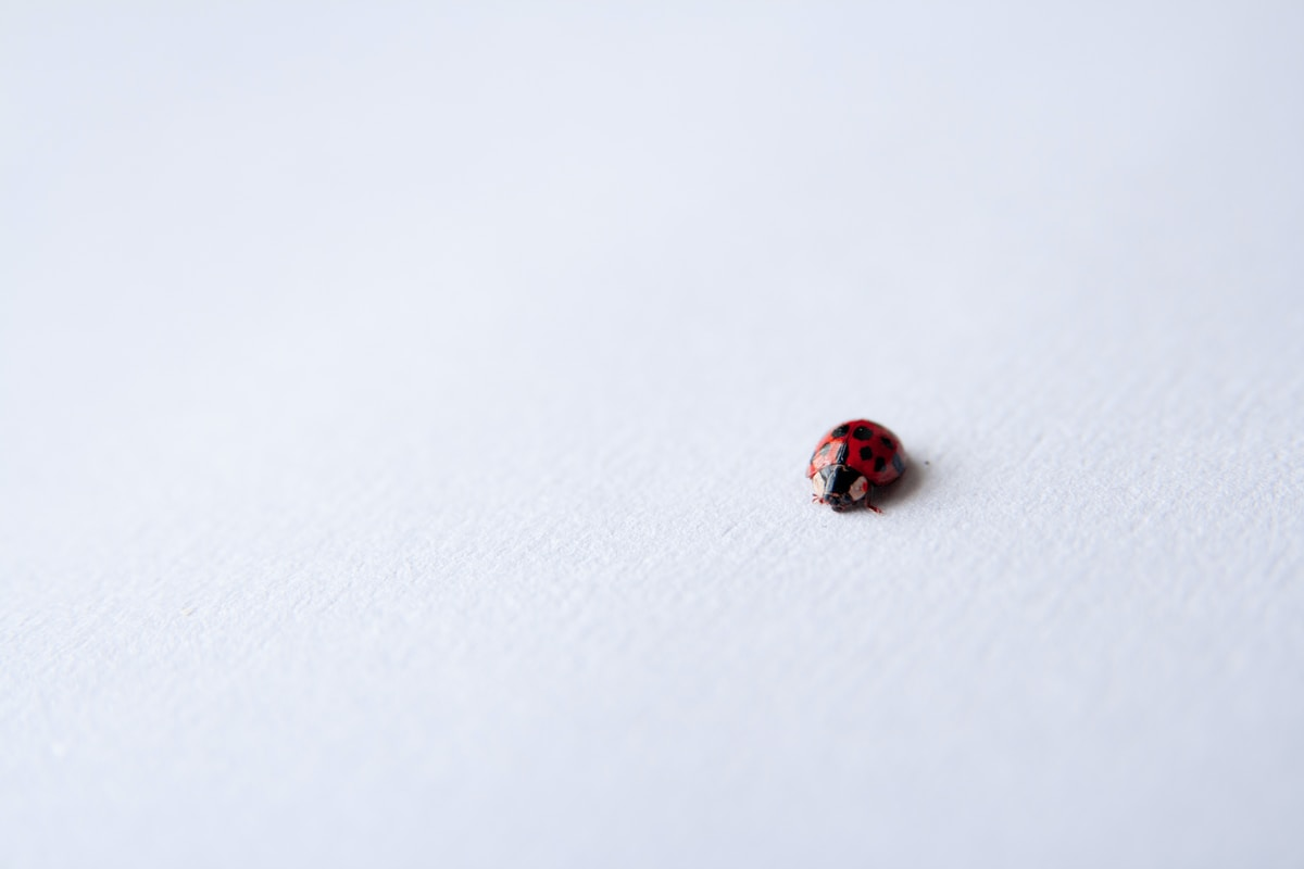 """If a ladybug shows up...Something you thought was lost will be making its way back to you."""