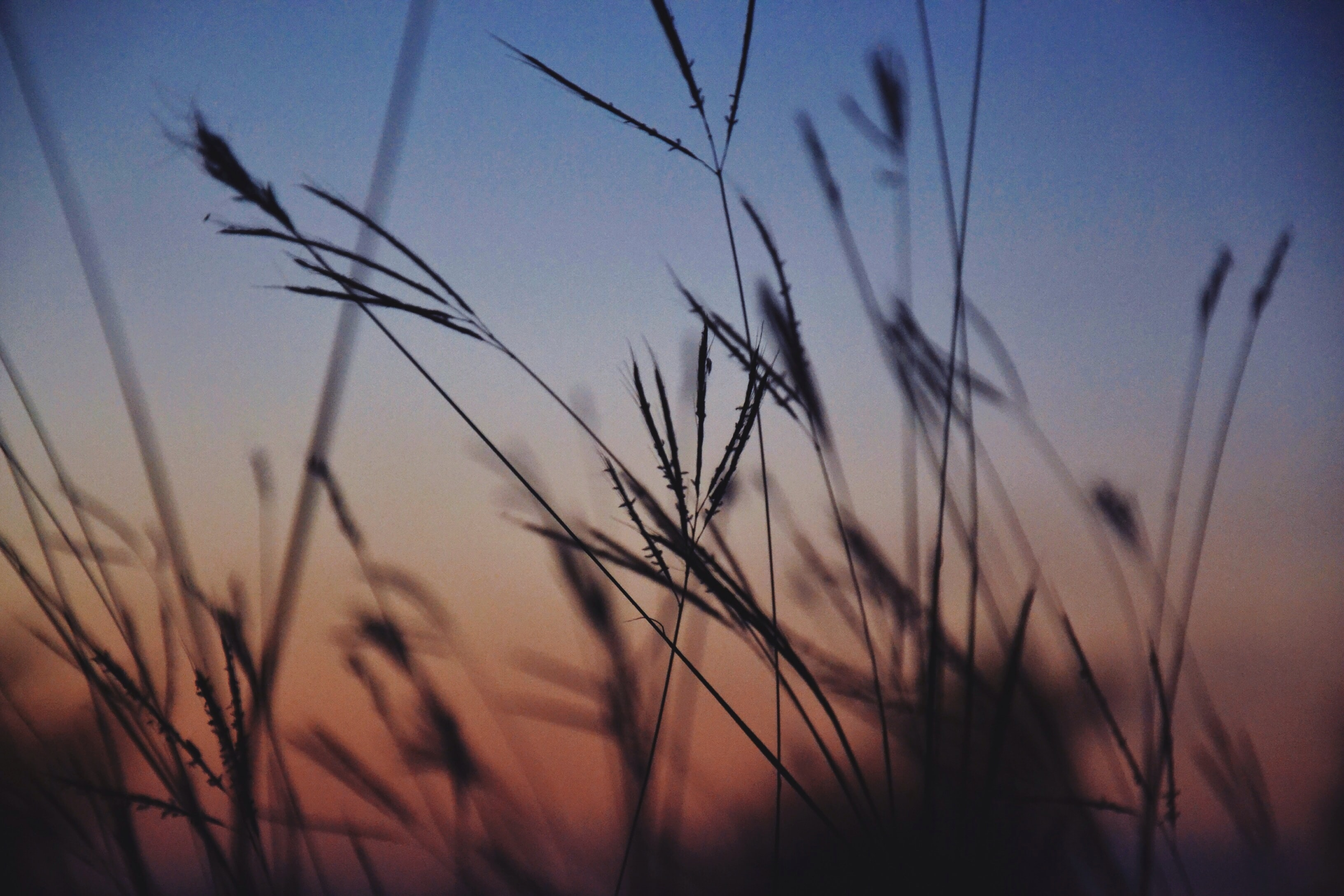 silhouette of grasses selective focus photography
