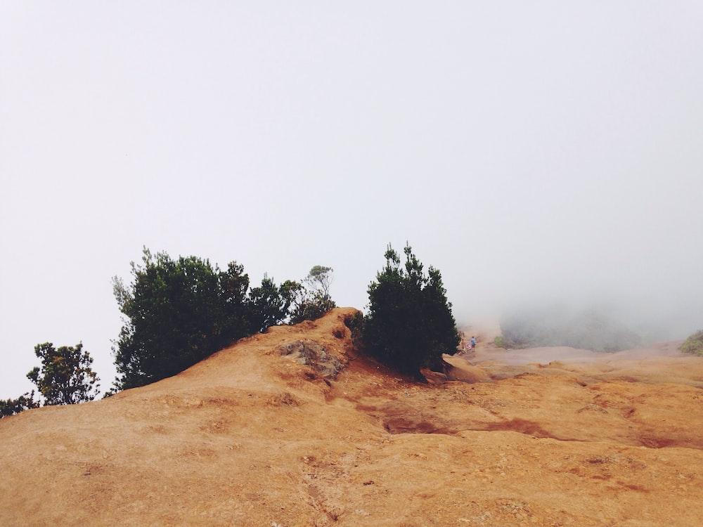 bush near cliff