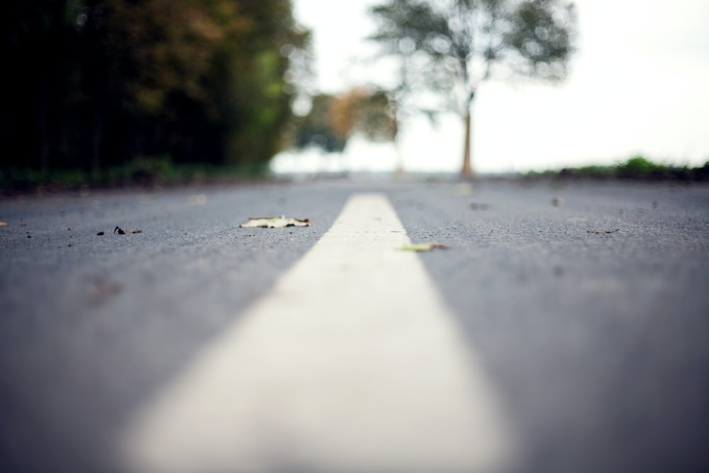 closeup photography of middle of the road