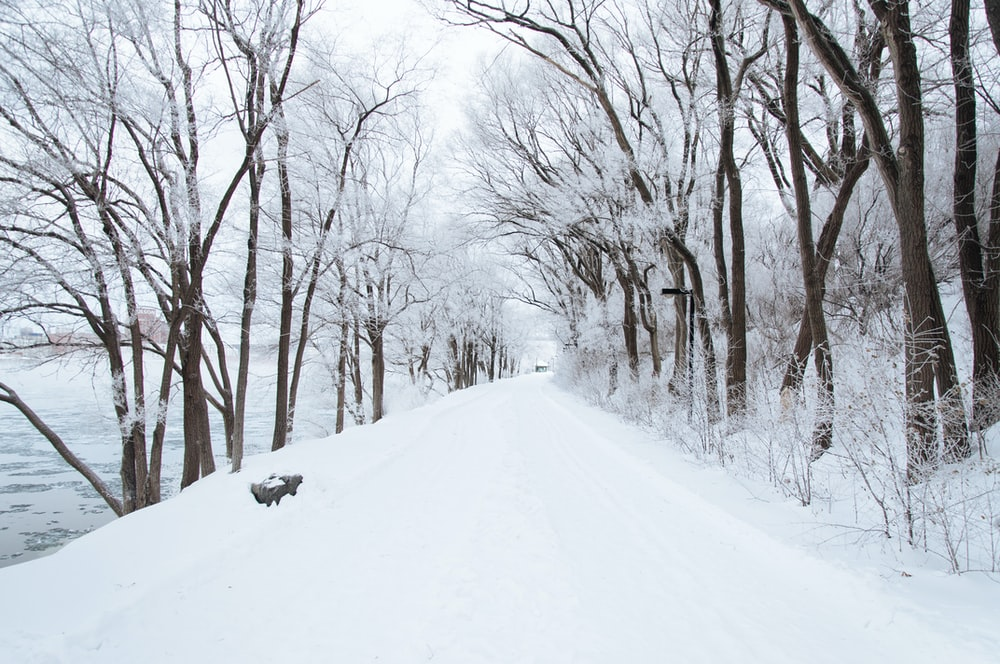 dirt road cover by snow