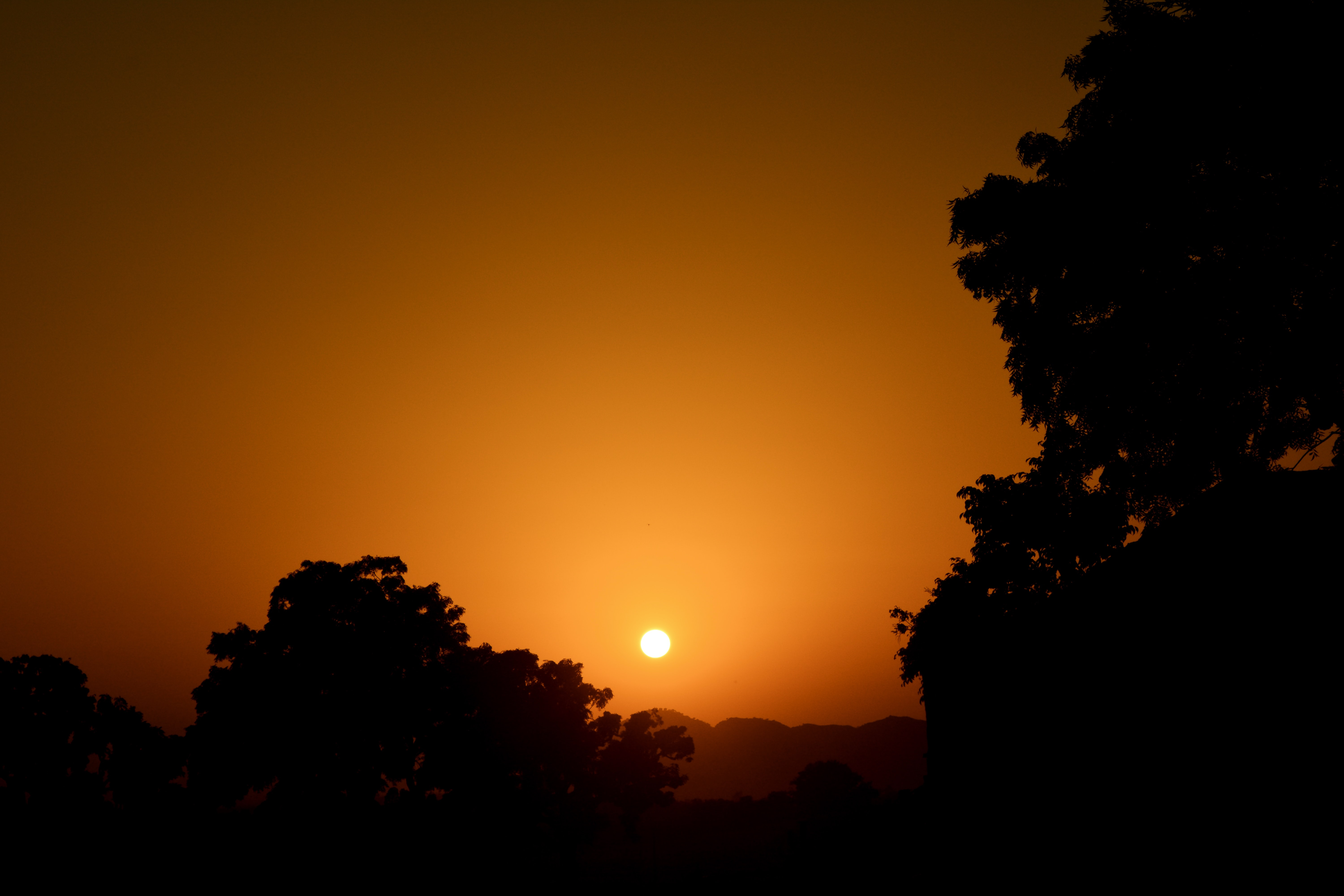 Trees in silhouette against a dramatic hazy warm golden sunset.