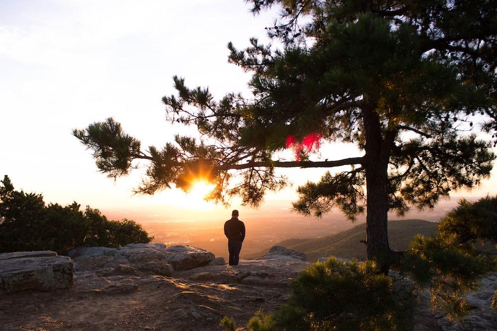 silhouette photo of man standing near tree watching hills