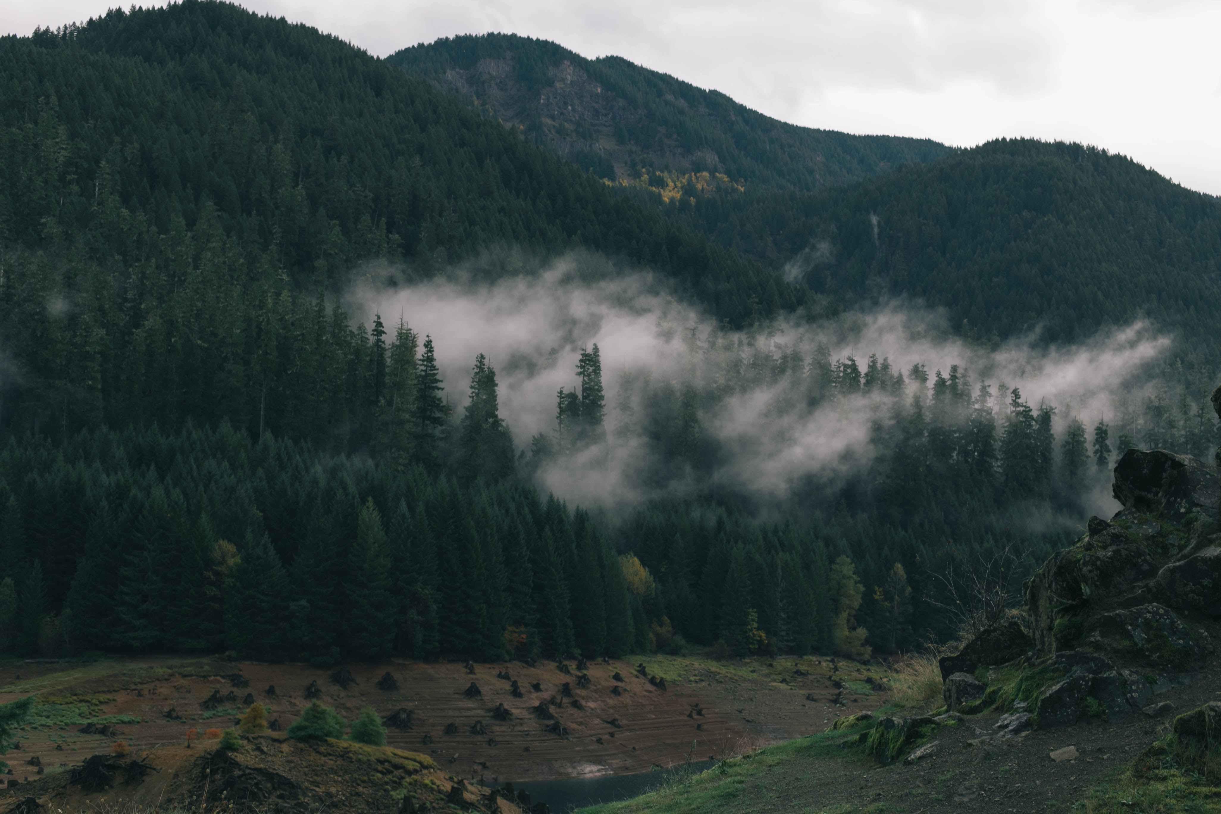 Fog over the tops of evergreen trees on tall hills