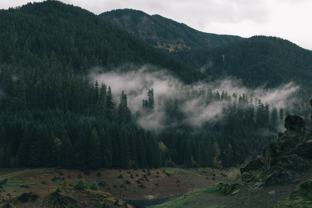 mist covered forest